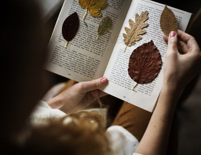 Hands Making Dried Flowers Collection in Book Handmade Work Hobb