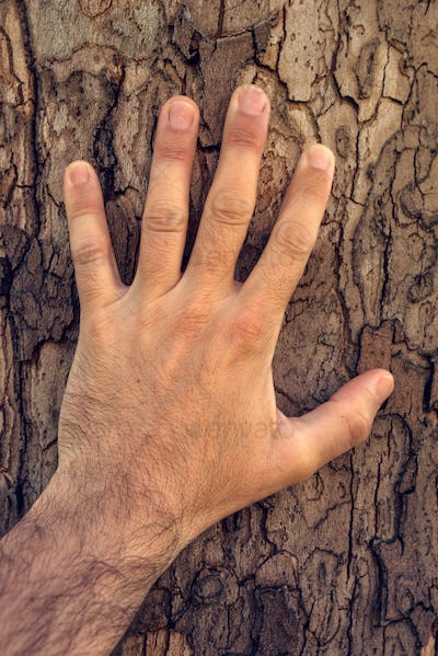 Hand touching maple tree
