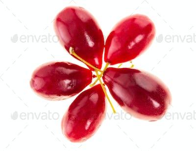 Ripe red dogwood berries.
