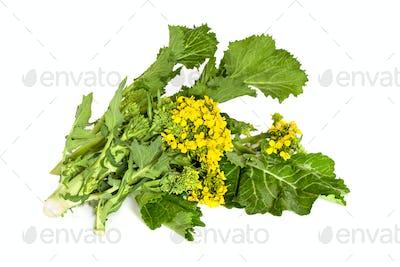 Broccoli Rabe Isolated
