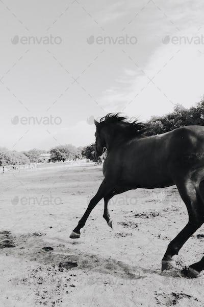 wild wild horses