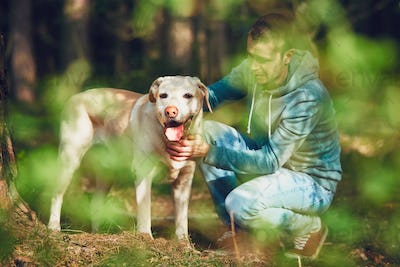 Sunny day with dog in forest