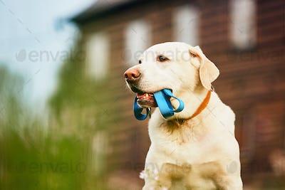 Cute dog waiting for walk