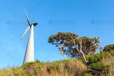 wind turbine on seaside