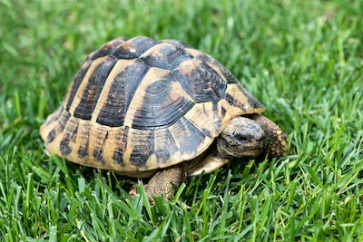 Turtle on the grass