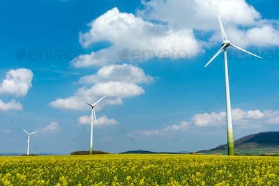 Wind engines in fields of rapeseed
