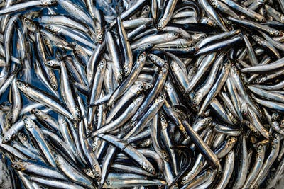 Small sardines fish background on the market
