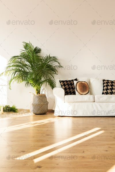 Simple living room with sofa