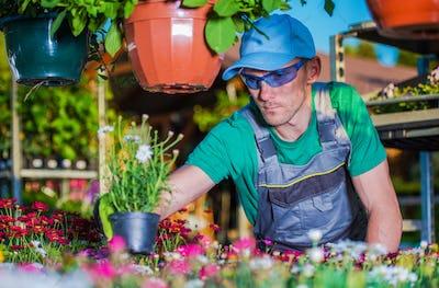 Gardener Picking Flowers