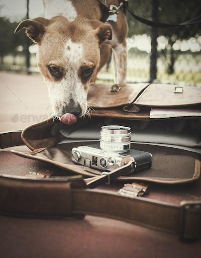 Dog and Film Camera