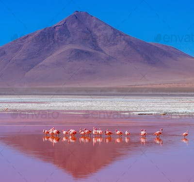 Flamingoes On Laguna Colorada