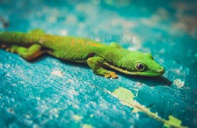 Small green gecko