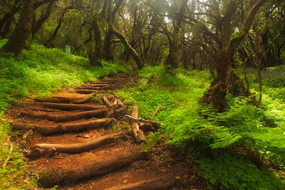Forest stairs in a Garajonay national park