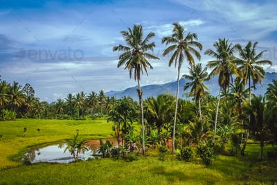 Indonesian tropical landscape