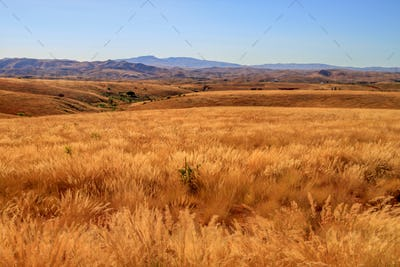Madagascar dry grassland
