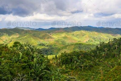Rainforest of Madagascar