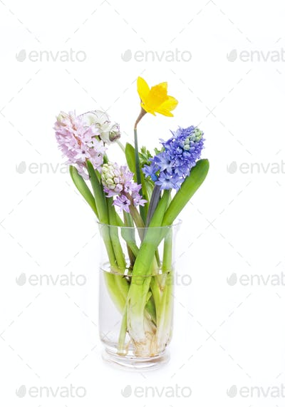 Spring flowers - hyacinth and narcissus on white background