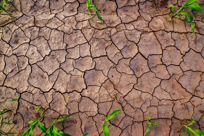 Dry corn field land with cracks, top view