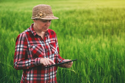 Female farmer using tablet computer in wheat crop field