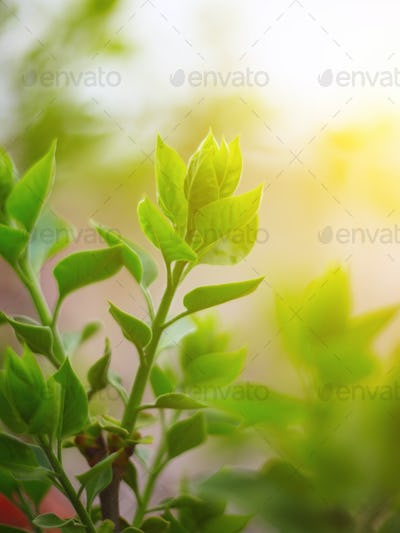 Beautiful green leaves and bright sun