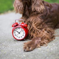 Time for dog