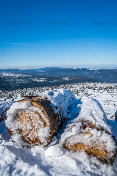 A pile of logs covered in snow