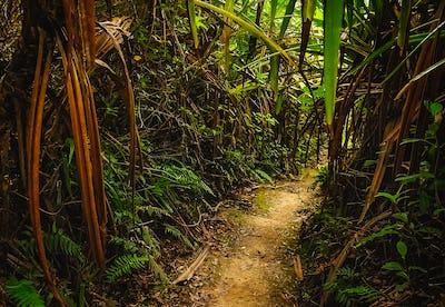 Jungle path in Sumatra