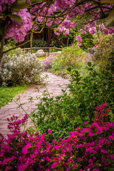 Stony pathway in a park in spring