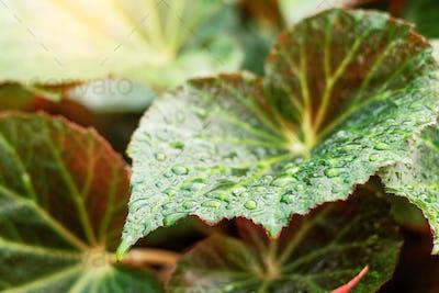 leaves in the rainy season