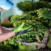 Taking Care of Garden Trees