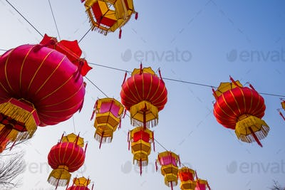 Traditional Chinese Red Lantern Hanging On Tree, celebrating New Year