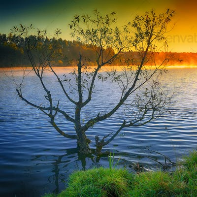 Lonely tree growing in a pond at sunrise.