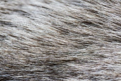 close up of fur background