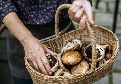 Closeup of hand holding wooden basket with mushroom inside