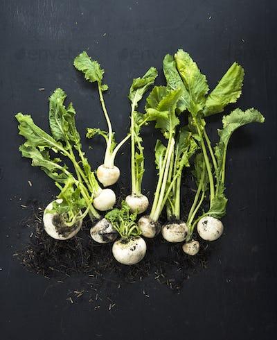 Aerial view of fresh white radish on black background