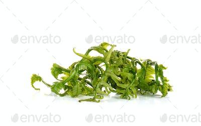 Vegetable fern on white background.