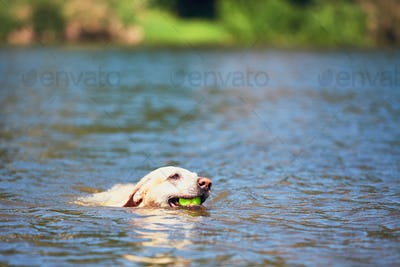 Summer time with dog