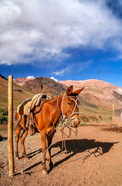 Horse in Andes