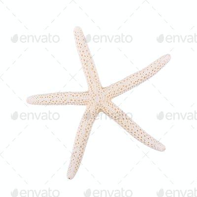Sea starfish on a white background