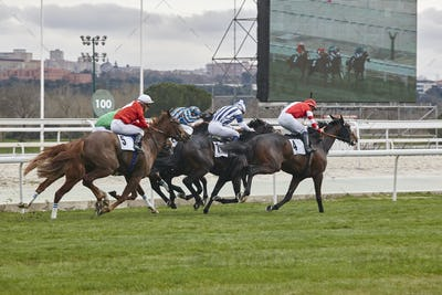 Horse race final rush. Competition sport. Hippodrome. Winner. Speed background