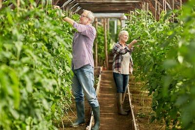 senior couple working at farm greenhouse