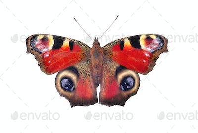 European peacock butterfly, isolated on white