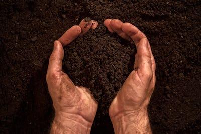 Fertile soil in dirty male hands