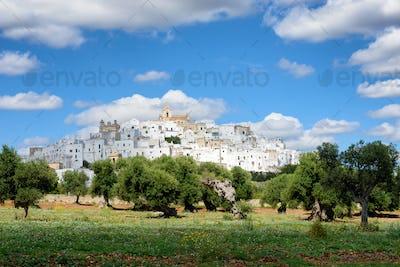 Ostuni, the white city of Puglia with olive trees
