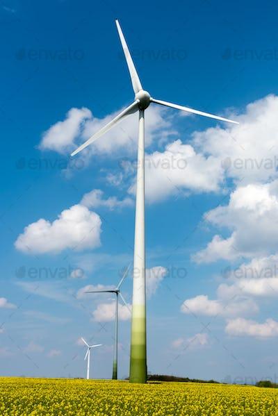 Windwheels in an oilseed rape field