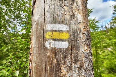 Close up of a hiking trail marking painted on tree.