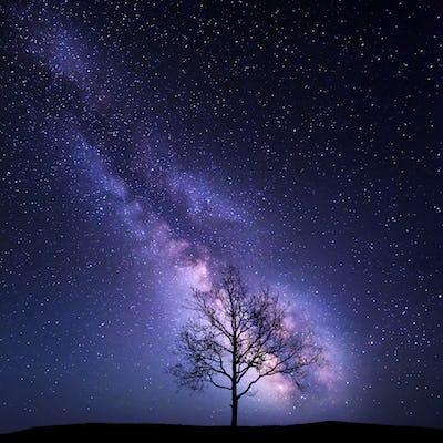 Tree against Milky Way. Night landscape