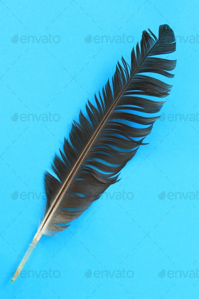 Closeup of black feather