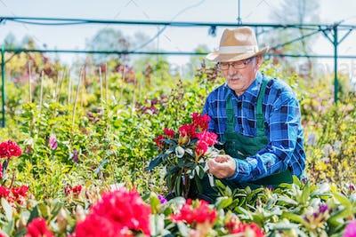 Senior gardener choosing a potted plant.