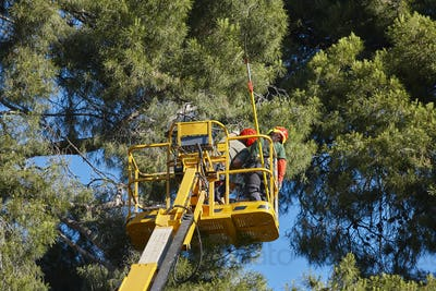 Tree work, pruning operations. Crane and pine wood forest